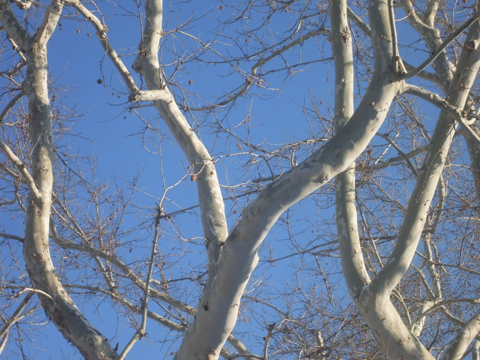 tree-ballet