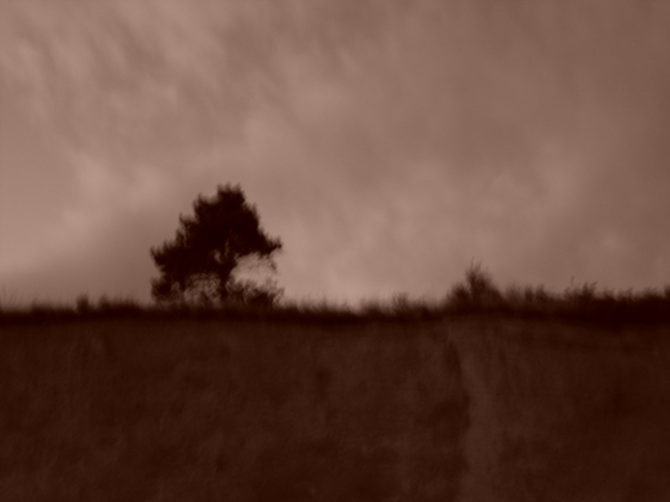lone tree on the bluff