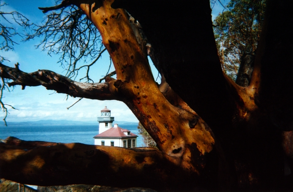 lighthouse framed by Madrone branches