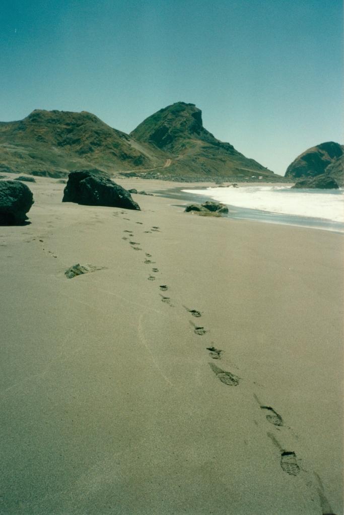 a summer path